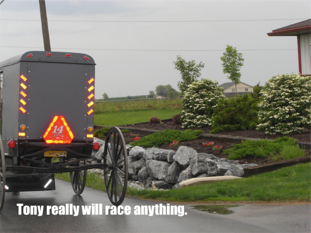 LOL RACE PICS: AMISH STEWART FAN